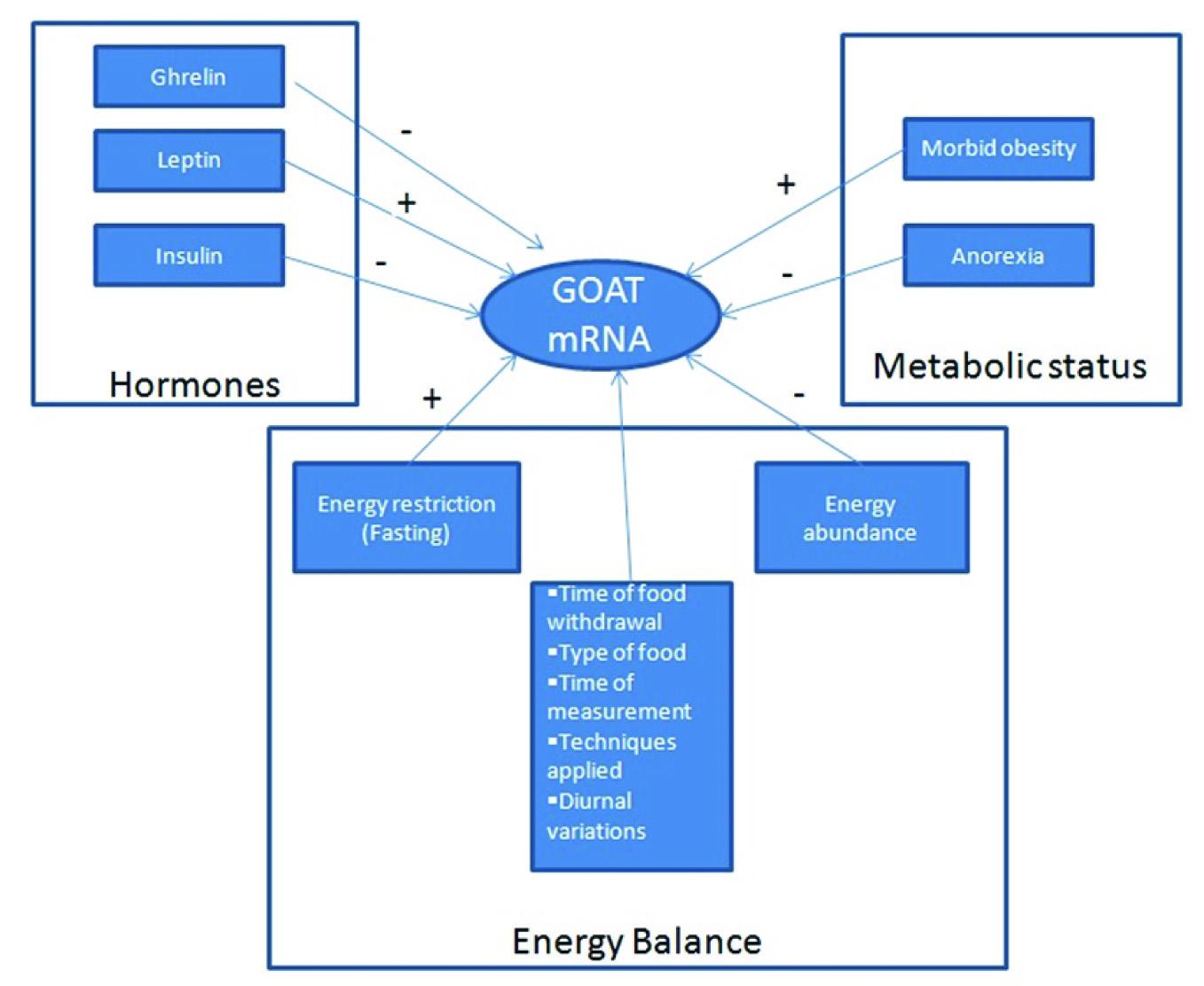 JCDR - Energy balance, Ghrelin, Ghrelin O acyl transferase, Glucose ...